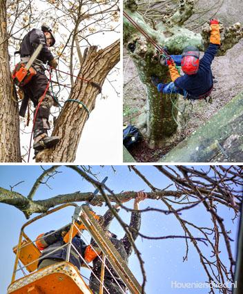 Impressie van boomverzorging